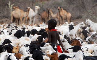 Conference – The Path to the Greener Pastures: Pastoralism, the backbone of the world's dry lands