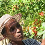 Crop production, agroecology and natural resource management