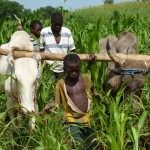 Agriculture, livestock production and agroecology
