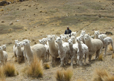 Securing pastoralists' land tenure rights