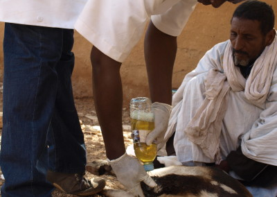 Mauritania: Improving access to veterinary drugs