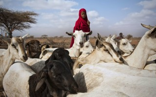 Better approaches in support of pastoralism. Article published in the magazine Farming Matters