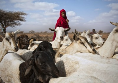 Better approaches in support of pastoralism
