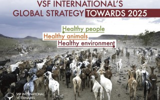 VSF International's global strategy towards 2025