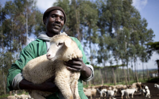 G20: invest in animal health, or risk undermining global health