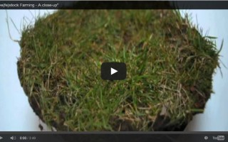 Live(fe)stock Farming – A close-up