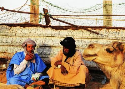 Western Sahara: Veterinary training in Sahrawi refugee camps