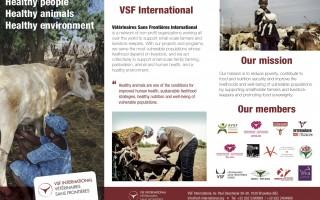VSF International in a nutshell